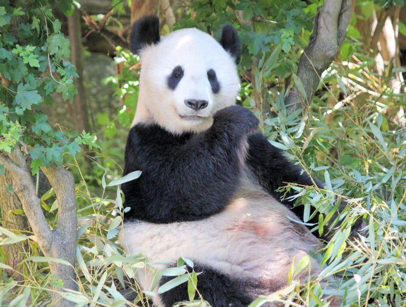 Panda antivirus: prodotti, prezzi e informazioni utili
